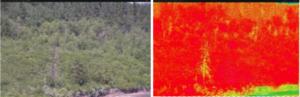 Bilde med NDVI-data